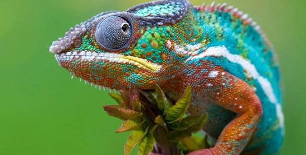 Onderzoekers Bootsen Effect Kameleon Na Met Geprinte Variant Technologie Geekly